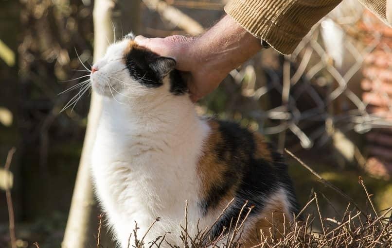 como ganar la confianza de mi gato