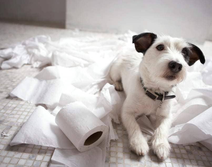 perro encima de papel higienico