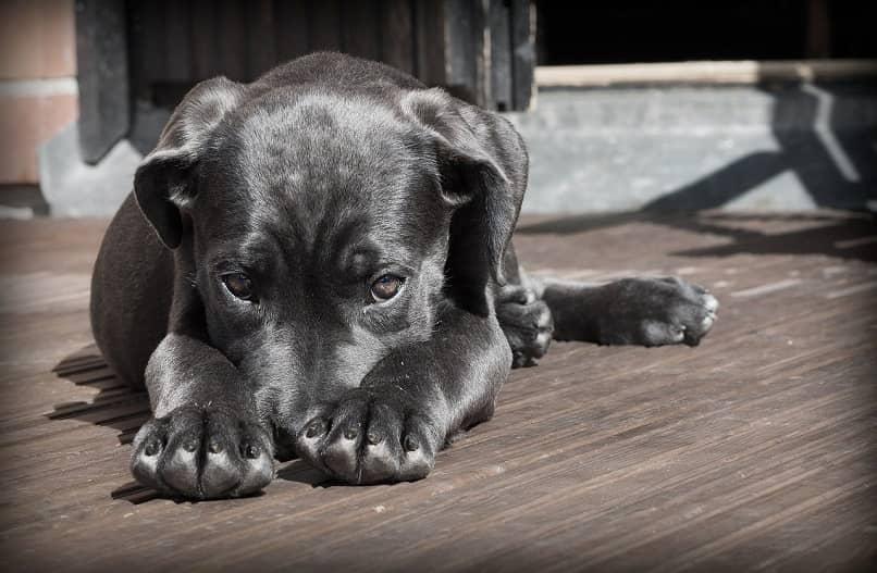llamado de atencion a cachorro