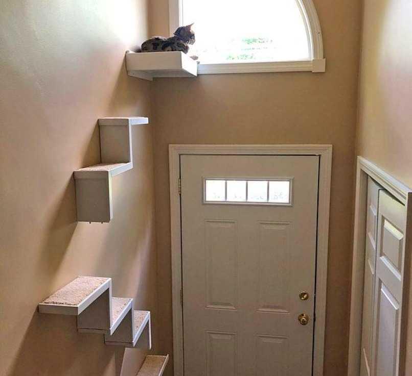 cama donde debe dormir mi gato