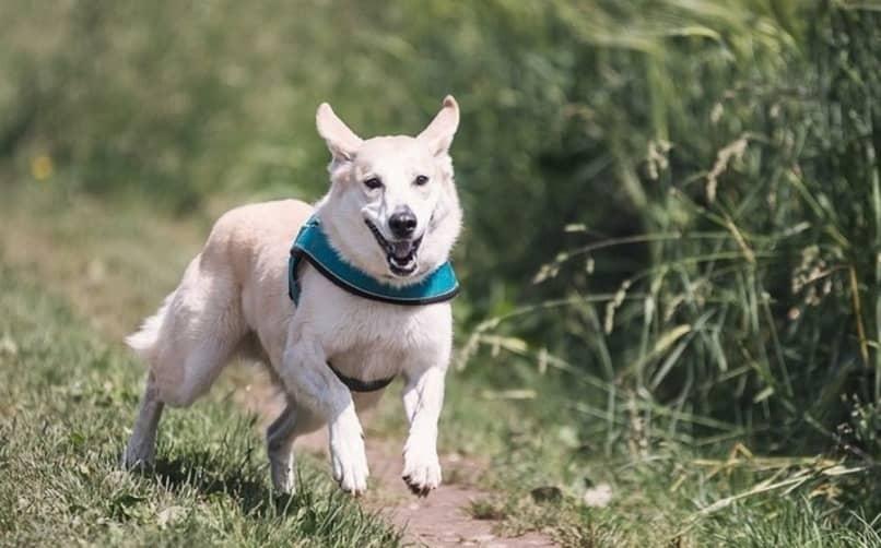 entretener al perro hiperactivo