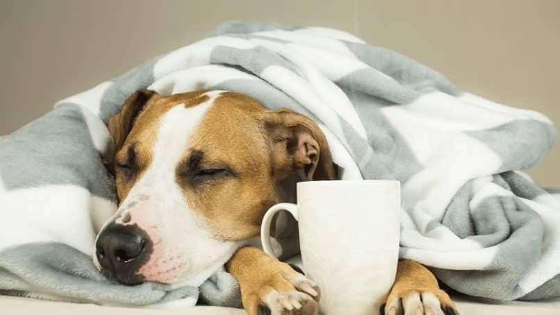 perro debajo de sabanas con te para el frio
