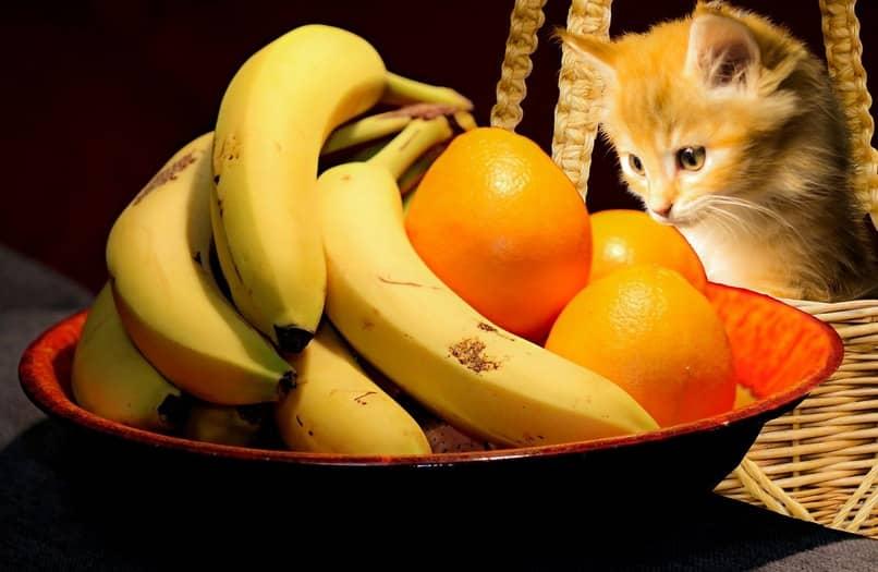 cuales frutas comen los gatos