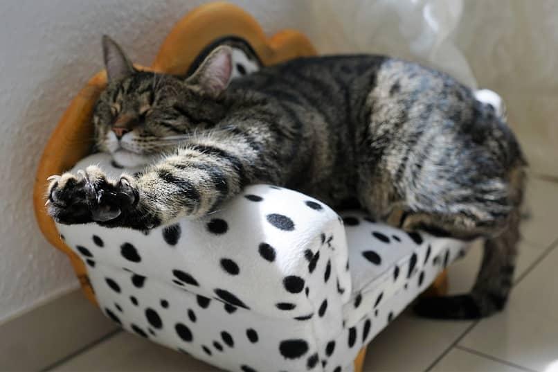 como hacer que mi gato duerma