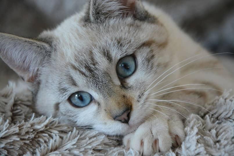 cuidar gato
