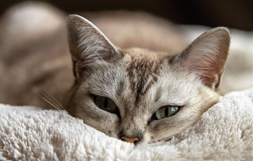 gato descansando