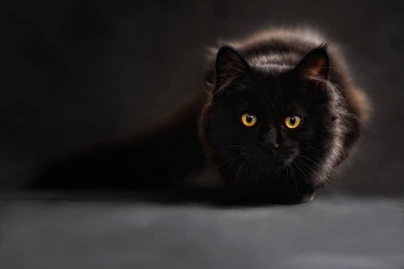 gato cubierto