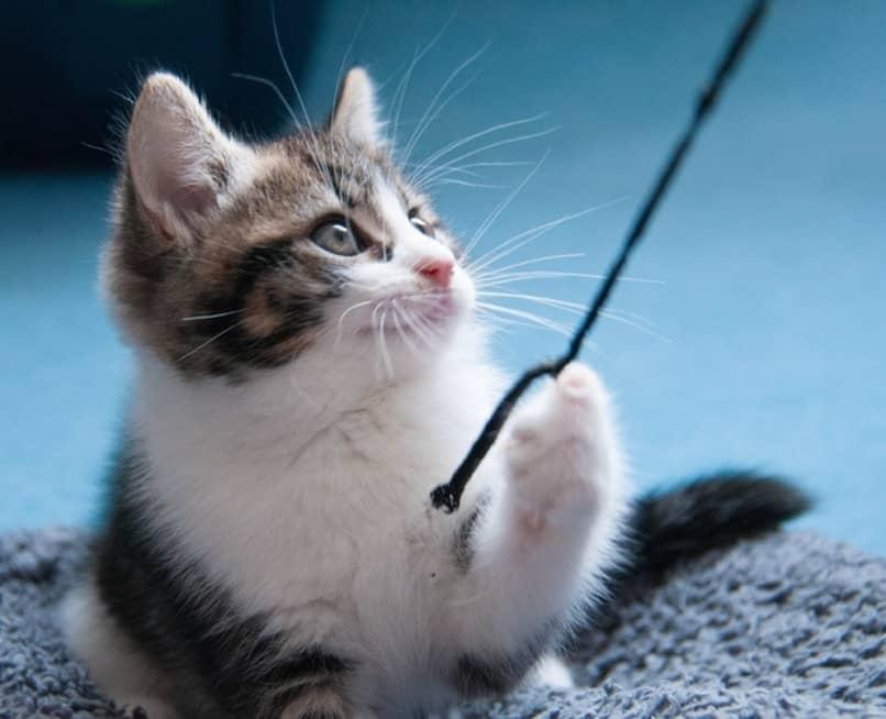 Cómo Adiestrar a un gato - Trucos, Consejos y Consideraciones Previas |  Blog de Animales