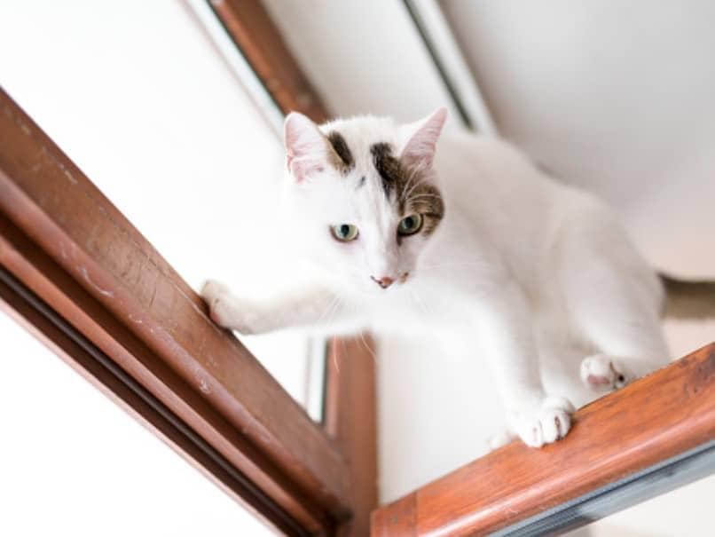 gato escalando