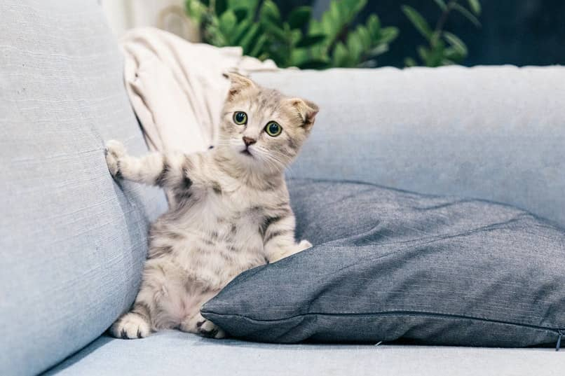 como evitar que el gato se suba en los muebles
