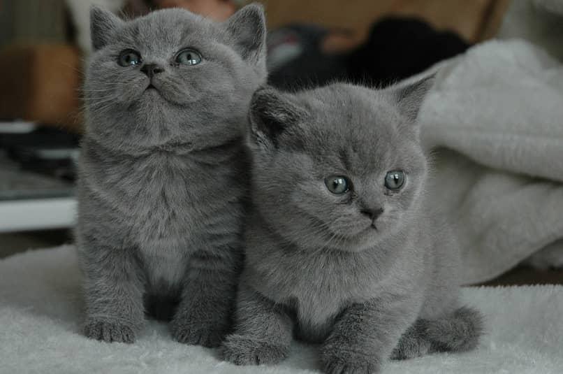 gatos en etapa de crecimiento