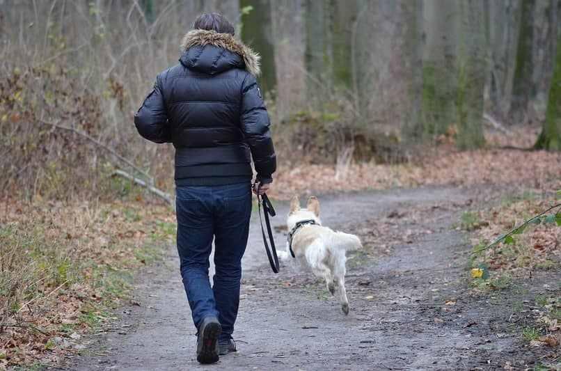 como cuidar perro