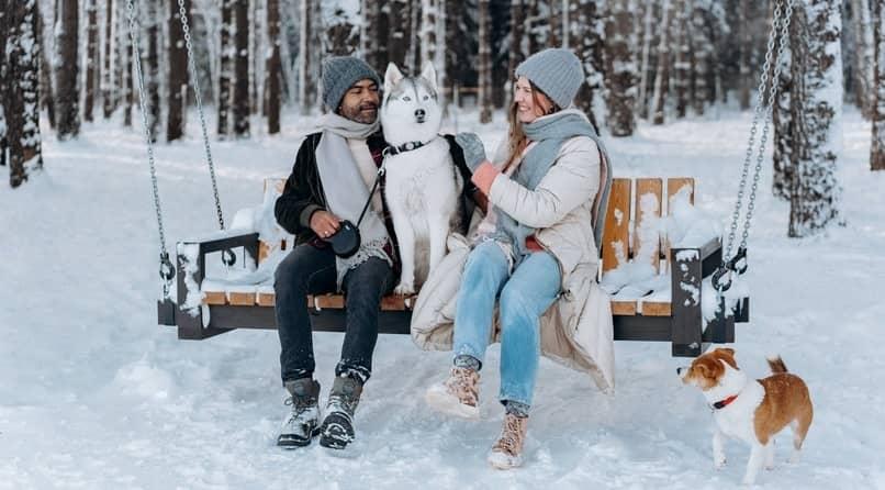 como prevenir y cuidar a mi perro del invierno