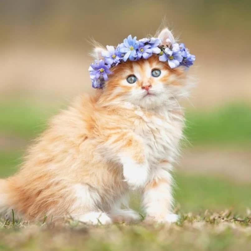 gata con corona de flores