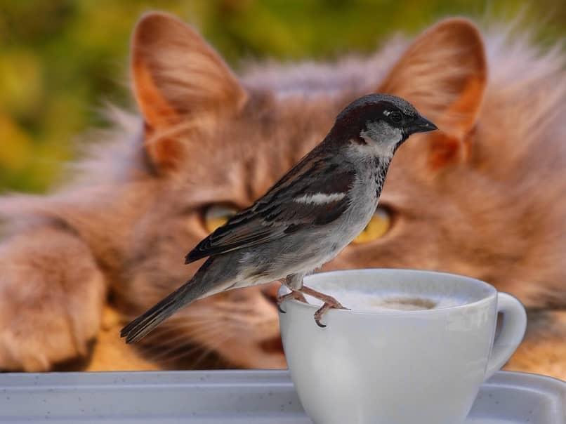 gato vigilando ave