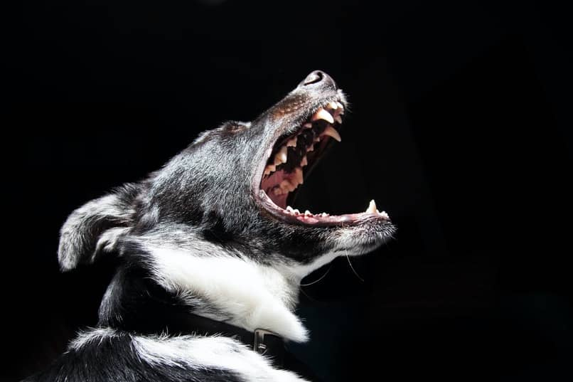 como calmar a un perro reactivo