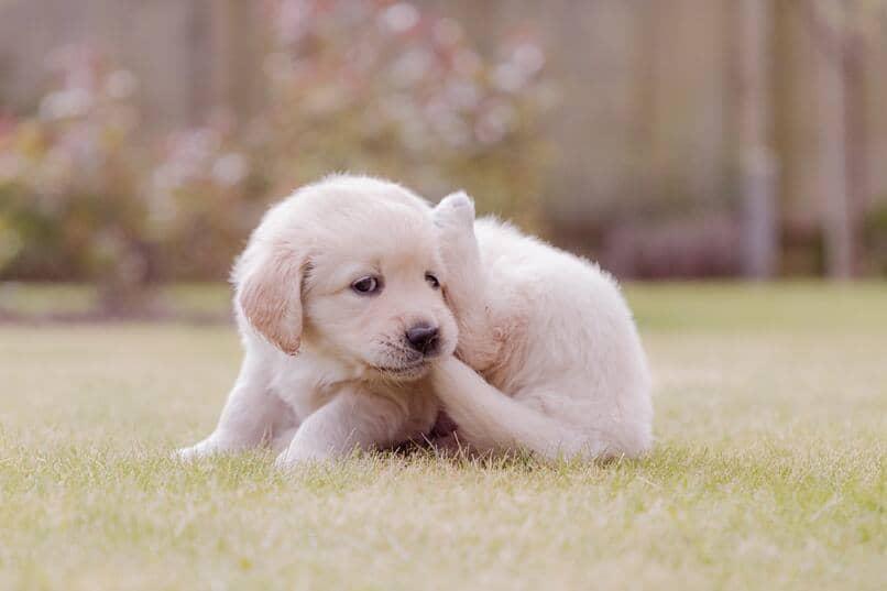 evitar que el perro se lastime al morder su cola