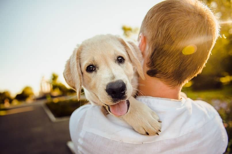 como demostrar amor a un perro