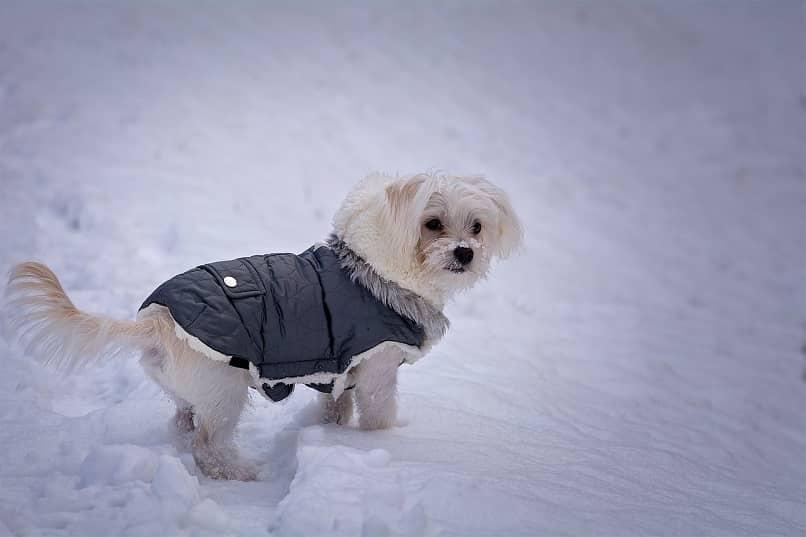 como proteger a mi perro del frio