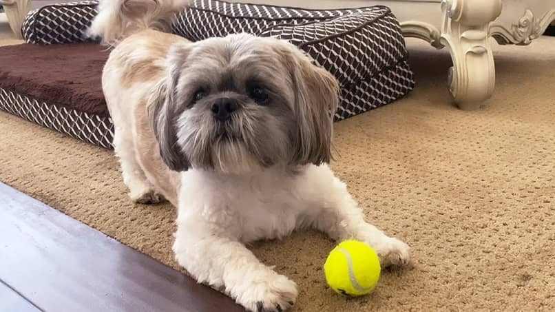 jugar con pelota