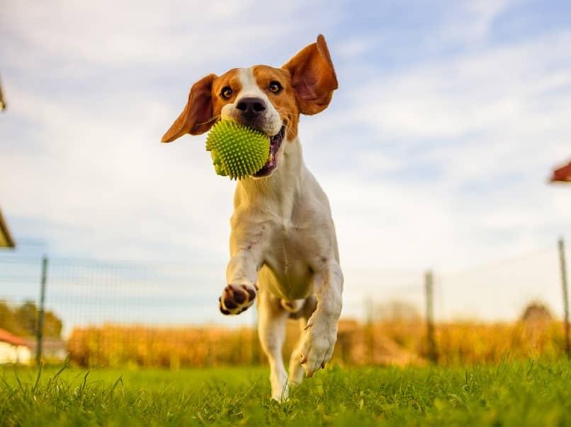 perro jugando en parque