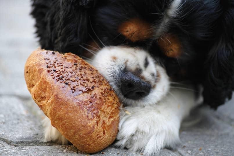 porque mi perro siempre tiene hambre