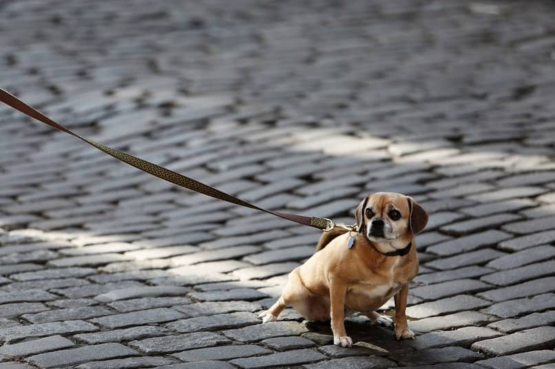 como pasear al perro sin que tire la correa