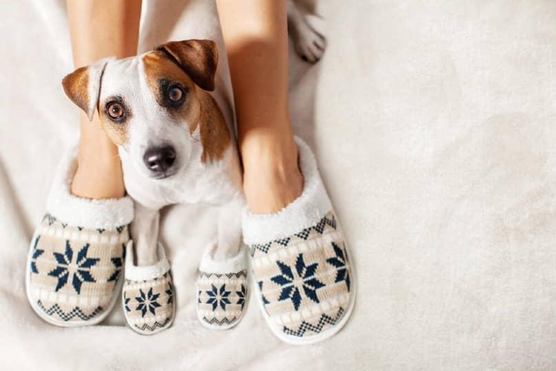 perro con pantuflas para el frio
