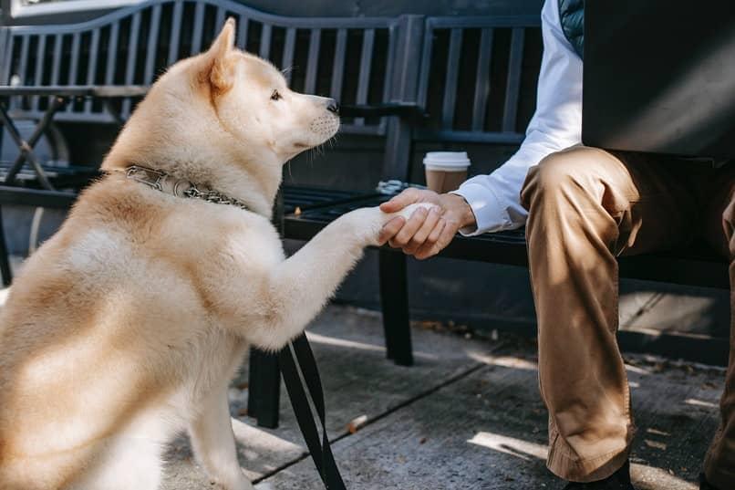 como cansar y ejercitar al perro en la casa