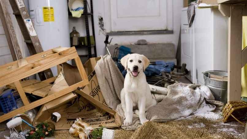 perro muerde y destroza casa