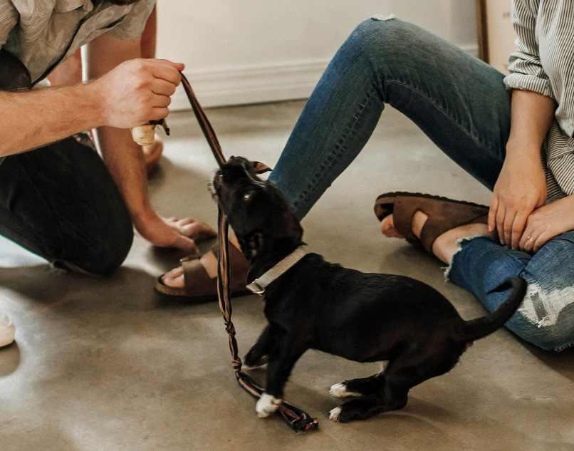 perro hiperactivo mordiendo cuerda
