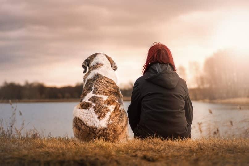 como demostrar amor a tu mascota