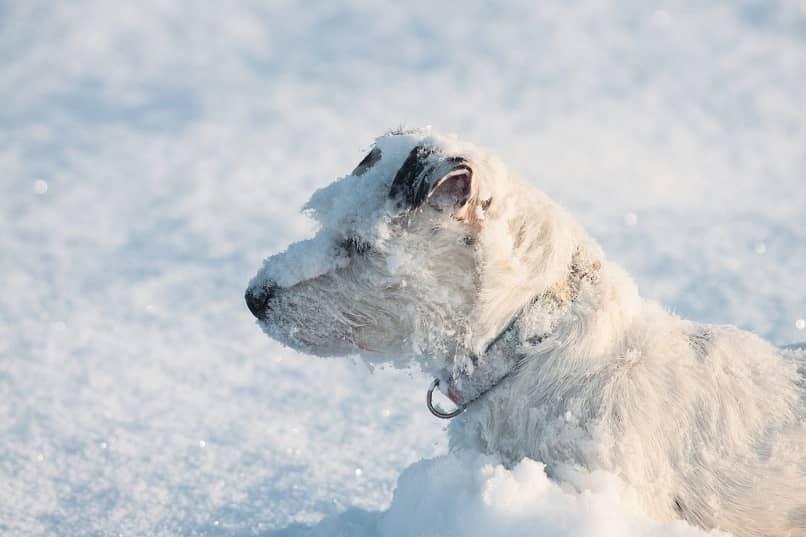 perro revolcandose