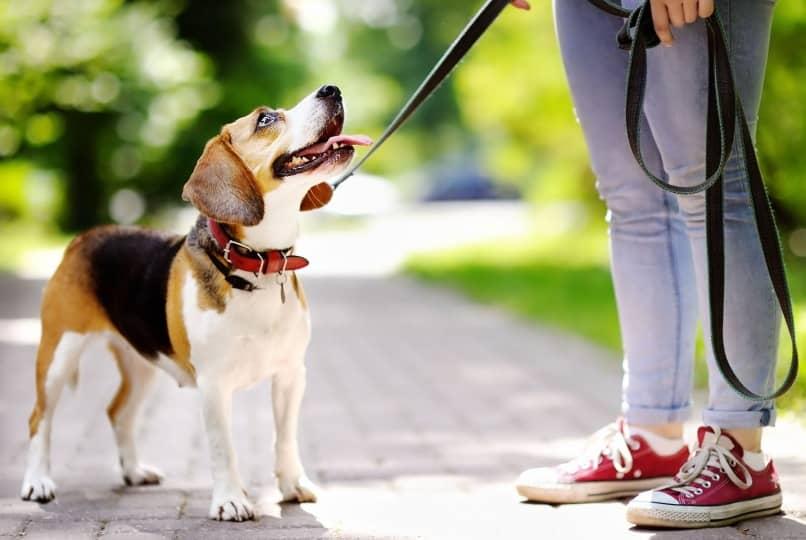 perro joven paseando en el parque