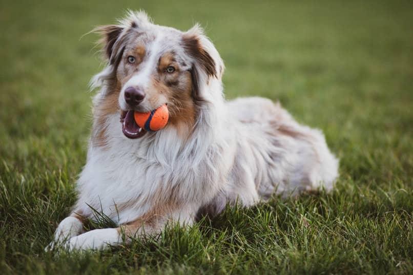 perro traer la pelota
