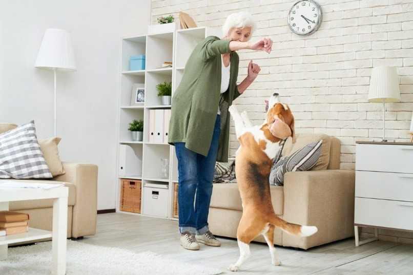 perro hiperactivo jugando con duena