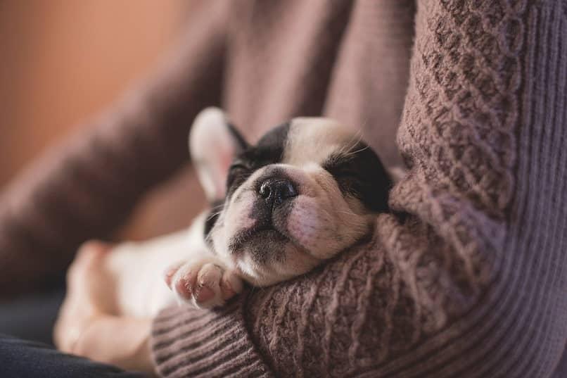 cuanto tiempo duerme un cachorro